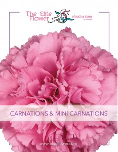 Elite_Flower-Carnations-01