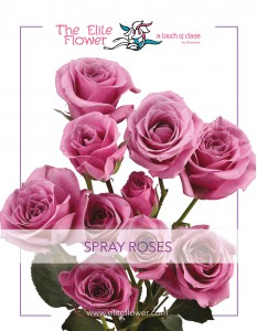 Elite_Flower-SprayRoses-01