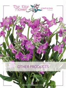 Elite_Flower_Other_Products
