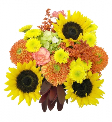 Soltice 15 Stems
